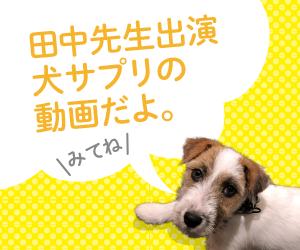 田中先生の犬サプリ動画
