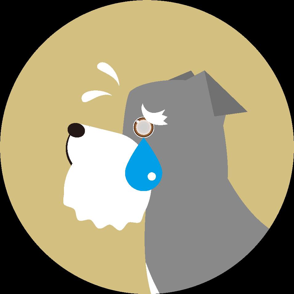 白内障 犬